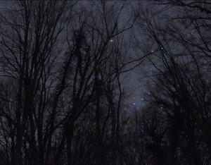 zvijezde u sumi_nedjeljko markovic_fruska gora_vojvodina